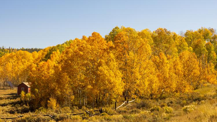Brilliant orange and yellow trees at fall in southern Wyoming at the Continential Divide