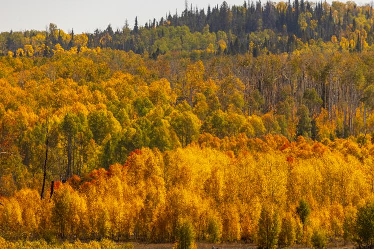 Fall's reds, oranges, and yellows as far as the eye can see in Wyoming
