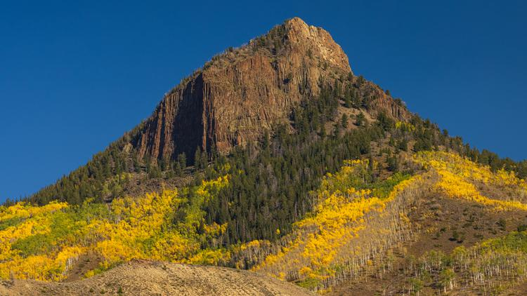 Brilliant yellow aspen trees cree up Whitely Peak in Colorado's high country