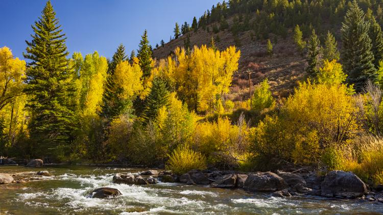 The Blue River - a tributary of the Colorado River - flows along with trees on the banks changing to their fall colors
