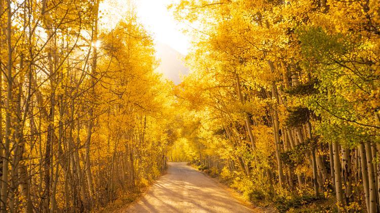 Golden hues light up Boreas Pass and the golden fall foliage in Colorado